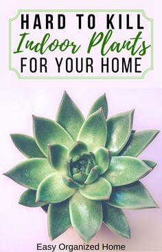 Quick To Build Moveable Greenhouse Options Not Only Are These Awesome Indoor Plants Low Maintenance And Super Hard To Kill, They Will Purify The Air In Your Homeapartment Common House Plants, Easy House Plants, House Plants Decor, Plant Decor, Tall Indoor Plants, Indoor Trees, Indoor Plant Pots, Nasa Plants, Best Office Plants