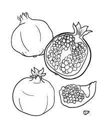 Free Coloring Pages Pomegranate Drawing, Pomegranate Tattoo, Pomegranate Art, Free Printable Coloring Pages, Coloring Book Pages, Embroidery Patterns, Hand Embroidery, Fruit Illustration, Tattoo Outline