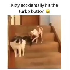 Newest Funny Dog Memes Collection Funny Animal Jokes, Cute Funny Animals, Funny Animal Pictures, Cute Baby Animals, Funny Cute, Cute Cats, Funny Animal Sayings, Wild Animals, Cute Animal Humor