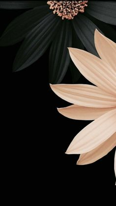 55 Elegant Phone Wallpapers You Will Like – Page 34 of 200 – CoCohots – Phone backgrounds Wallpaper Wall, Flower Background Wallpaper, Flower Backgrounds, Colorful Wallpaper, Black Wallpaper, Mobile Wallpaper, Wallpaper Backgrounds, Iphone Wallpapers, Pretty Phone Backgrounds