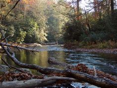 The South Mills River in Pisgah National Forest.