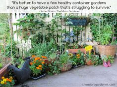 CONTAINER GARDENS offer so many benefits. More control over what & when you grow; minimal weeds & pests; easy access; kind on your back; portable + more. CLICK to learn more tips on growing a low maintenance easy garden. | The Micro Gardener
