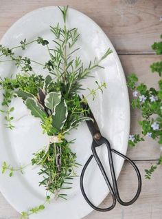 how to cut herbs for use