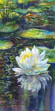 Lilypond Reflections Prints by Catherine M. James