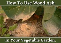 How To Use Wood Ash In Your Garden - contains many nutrients that are good for your plants. | May @ Homestead Lifestyle
