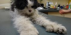 Velo: the senior cat rescued in NDG | Montreal Dog Blog