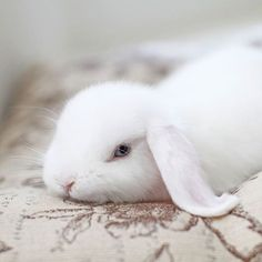 Adorable little white bunny!