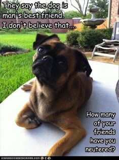 22 Funny Animal Memes And Pictures Of The Day