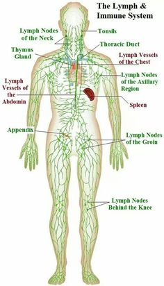 lymphatic drainage – Lisa Higgins – massage across the table Health And Fitness Magazine, Health And Fitness Tips, Health Diet, Good Health Tips, Health Advice, K Tape, Lymphatic Massage, Bones, Massage Therapy