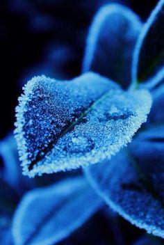 Frosty Leaves by Constantin Fellermann