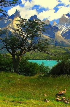 Magestic Cuernos in Torres del paine, Chile