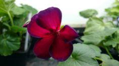 Nåt jag hittade i en blomlåda på skansen,  rotade och fick ny färg