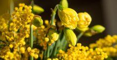 Kalenderwoche 06 kurzstielig: 20 Narzissen und Mimose