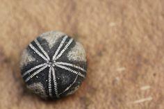 Fossil, Fossils, Sea Urchins, Petrified, Sea, Water