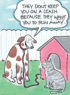 Funny pictures about Point For Dogs. Oh, and cool pics about Point For Dogs. Also, Point For Dogs photos. Funny Dogs, Funny Animals, Cute Animals, Crazy Cat Lady, Crazy Cats, Lol, I Love Dogs, Puppy Love, Funny Cartoons