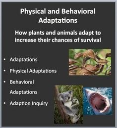 This lesson package on Physical & Behavioral Adaptations: How plants and animals adapt to increase their chances of survival - begins with an introduction on Adaptations. The lesson then moves onto Behavioral and Physical Adaptations with multiple inquiry activities built into the PowerPoint. Your kids will be encouraged to collaborate and perform a little research. This is a great time for them to take out their own devices or use classroom computers. If these aren't available, this sec