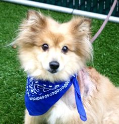DIGGY - A1110378 - - Manhattan  TO E DESTROYED 05/02/17 **NEW HOPE RESCUE ONLY** -  Click for info & Current Status: http://nycdogs.urgentpodr.org/diggy-a1110378/