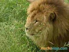 Parque de la naturaleza de Cabárceno | Cantabria | Spain Especie Animal, Tv, Amazing, Animals, Caves, Continents, Documentaries, Parks, Nature