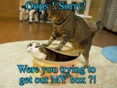 MY! BOX! http://cheezburger.com/9041794560