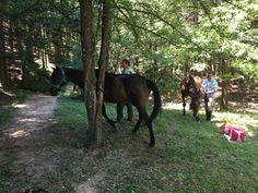picnic nella radura dell'Uomo Gobbo Picnic, Horses, Animals, Portion Plate, Animales, Animaux, Picnics, Animal, Animais