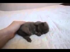 Video: This Teeny-Tiny, Itty-Bitty Kitten Can't Get Enough Petting  #Kitten #Cute #Cat