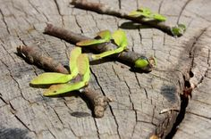 from 5 orange potatoes: twig and maple seed dragon flies. Cub Scout Activities, Nature Activities, Craft Activities, Activity Ideas, Craft Ideas, Bug Crafts, Camping Crafts, Nature Crafts, Insect Crafts