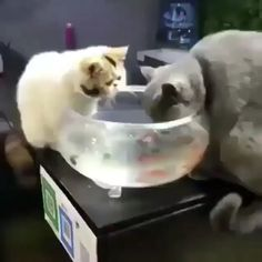 funny animals videos can't stop laughing & funny animals Cute Funny Animals, Cute Baby Animals, Animals And Pets, Funny Cats, Cute Dogs, Cute Cats And Kittens, I Love Cats, Crazy Cats, Cute Animal Videos