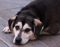 ricette per cani: 3 semplici pietanze