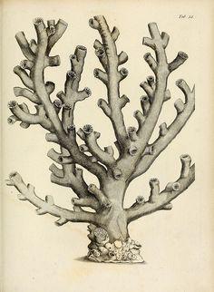 Exposition méthodique des genres de l'ordre des polypiers.  Agasse. Paris,1821
