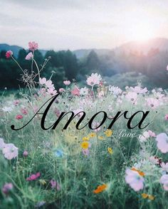 Baby girl names. Amora. Love. Unusual baby names, unique, uncommon. Sweet girl names. Female, strong, Romantic names. Names that start with an A