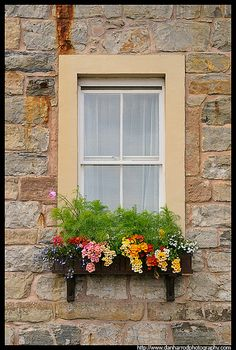 Window Box love this one for a cabin Window Box Flowers, Window Boxes, Flower Boxes, Garden Windows, Container Gardening, Succulent Containers, Container Flowers, Container Plants, Vegetable Gardening