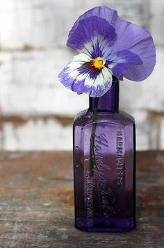 purple glass, love
