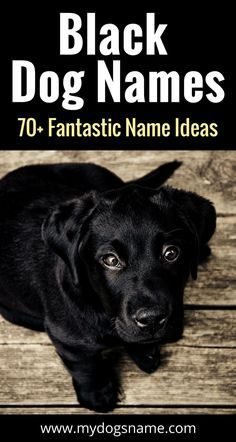 Black Dog Names The Ultimate List 150 Awesome Names Black Dog Names Dog Names Unique Dog Names