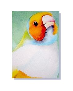 ACEO Giclee Art PRINT Lady Gouldian Finch Bird Painting Reproduction
