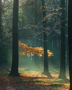 Goedemorgen, het rijtje van Boeksz is vandaag samengesteld door Tineke Hummel van @tinekehummel ... chaoot en druktemaker ...… Cool Pictures, My Photos, Trunks, Plants, Instagram, Drift Wood, Tree Trunks, Plant, Planets