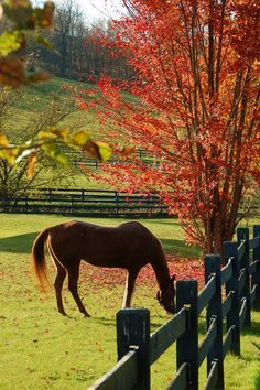 Country Living ~ autumn day, horse grazing