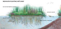 Benefits of Floating Wetland Islands