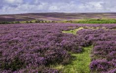 The North York Moors | 17 British Landscapes That Are So Beautiful You'll Want To Cry