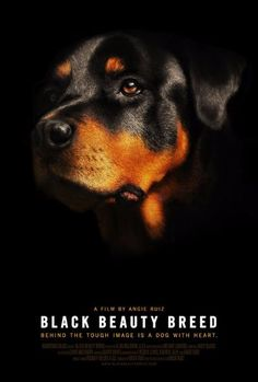 The Rottweiler is one of the oldest dog breeds with a heritage that can be traced back to ancient Roman times. Loyal, highly intelligent and courageous, the mod