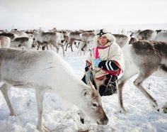 Erika Larsen spent three years photographing - and learning to understand - the Sami people in Scandinavia.