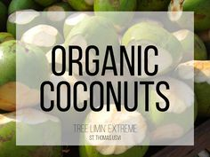 Tree Limin' Extreme: Organic Coconuts