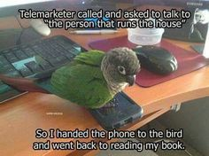 Then the bird passed the phone on to the dog, who ate it.