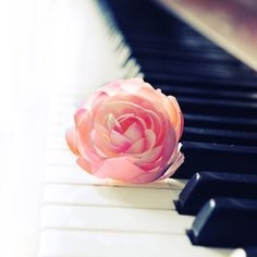Playing the piano without having someone to teach you can be difficult. To learn the piano online can have its ups and downs. Sound Of Music, Music Love, Music Is Life, My Music, Piano Keys, Piano Music, Piano Bar, Mundo Musical, Instruments