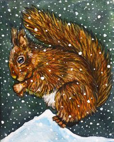 Squirrel original watercolour Painting  8 Snow Squirrel by rachelledyer