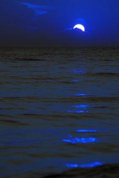 *Moon Shadow