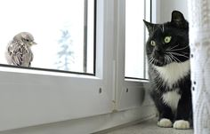 5 Things Cats Find Endlessly Fascinating for Reasons Beyond Us | Catster