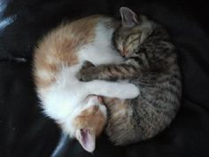 I am not a cat person, but that is so cute!