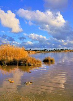 Las lagunas saladas de Torrevieja y La Mata forman un humedal protegido, con especies botánicas y aves típicas de esta zona.