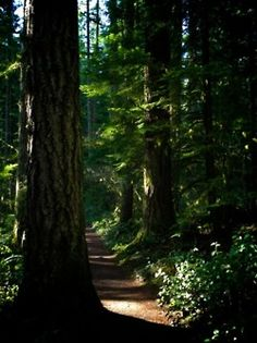 I love the Redwood Forest!!!!!!!!