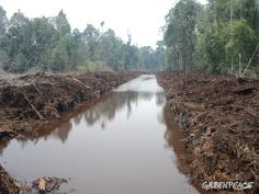 APRIL continues with forest destruction despite new sustainability policies | Greenpeace International